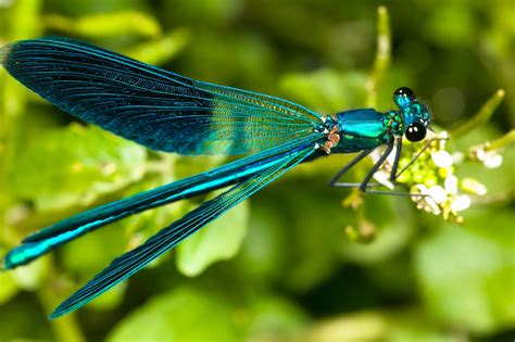 Star Short Story Contest 2015 winner: 'A Dragonfly Dashed ...