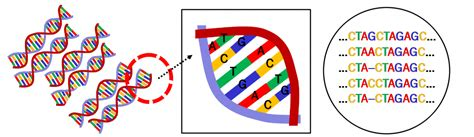 Architecture and Bioinformatics: Application of DNA alignment methods to human behaviors ...