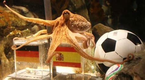 Paul le poulpe, la star du Mondial 2010, est mort