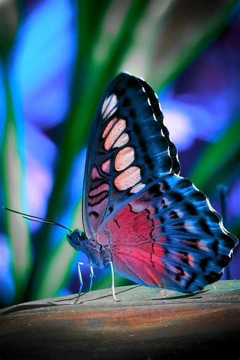 Colorful And Stunning Butterfly Photography