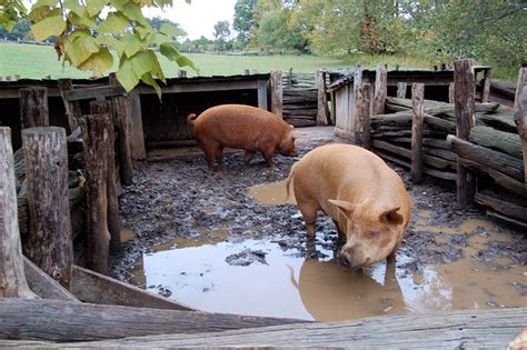 FAIR AND BIASED: STAY OUT OF THE HOG PEN!