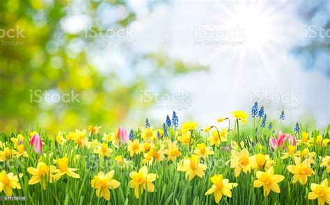 Spring Easter Background Stock Photo - Download Image Now ...