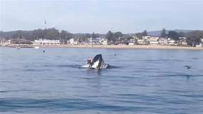 Watch: Paddle Boarder Almost Gets Swallowed Whole By A ...