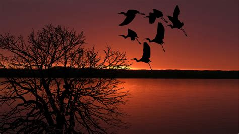 Free Images : sunset, birds, flying, sky, colorful, colors ...
