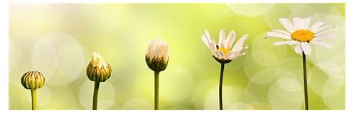 Growing Your Brand from Bud to Bloom: What You Need to ...