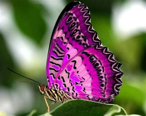 TCF Beautiful Butterfly 41 - grief support parents ...