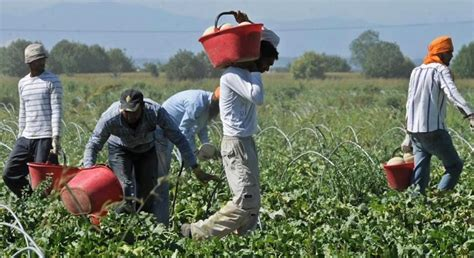 I migranti braccianti in agricoltura sono gli schiavi di ...