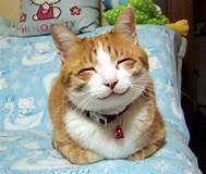 [Image - 71862] | Happy Cat | Know Your Meme