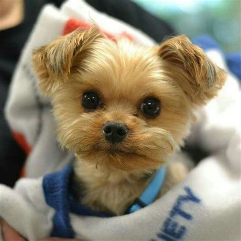 Sweet puppy face like my Buffy | Cute puppies, Dogs, Cute ...