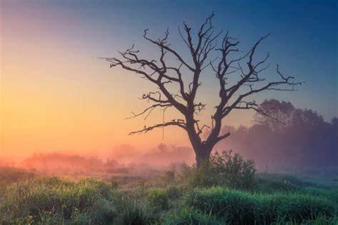 Best Zimbabwe Landscape Stock Photos, Pictures & Royalty ...