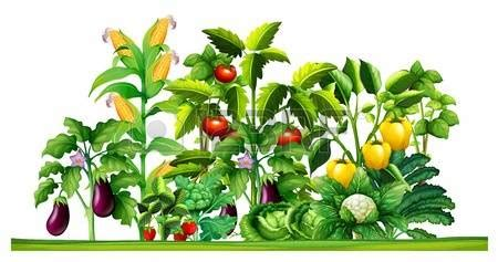 Outdoor plants clipart 20 free Cliparts | Download images ...