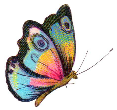 Royalty Free Image: Colorful Butterfly