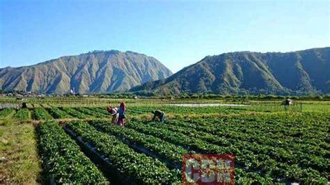 Kebijakan Sektor Pertanian dan Kelautan Diharapkan Mampu ...