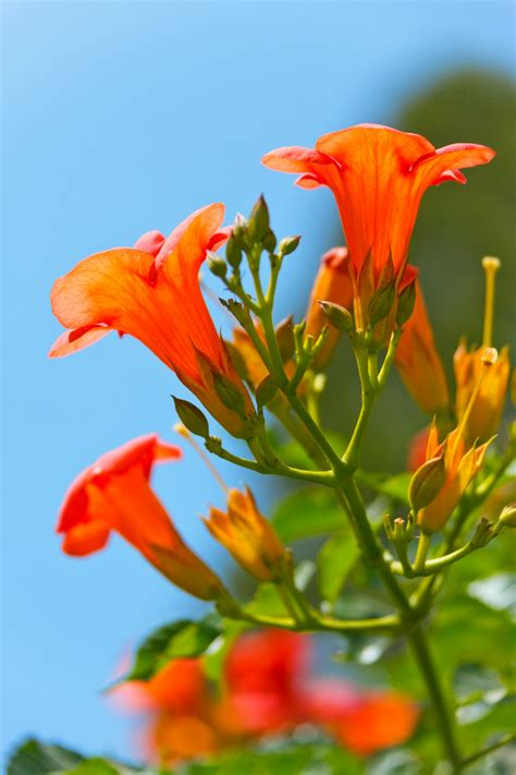 Beautiful Orange Flower Free Stock Photo - Public Domain ...