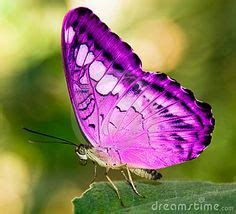 Real Pink Animals   animals pink butterfly   Think Pink ...