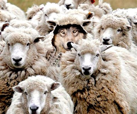 Wolf in Sheep's Clothing | David M Masters