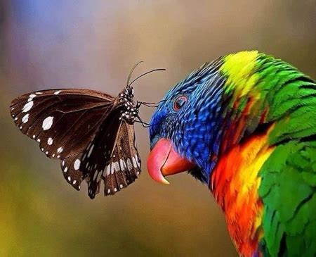 Beautiful Nature - Birds & Animals Background Wallpapers ...