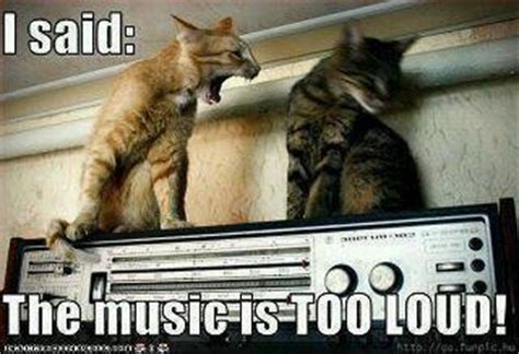 1000+ images about Cats! on Pinterest