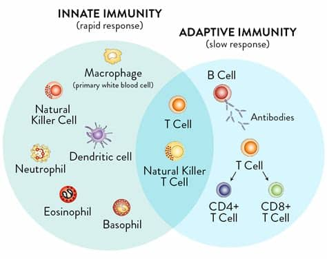 The Eradication of Smallpox and the Helper T-Cells ...