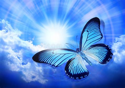 356,903 Butterfly Photos - Free & Royalty-Free Stock ...