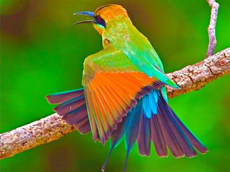 Free photo: Beautiful Bird - Animal, Beauty, Bird - Free ...