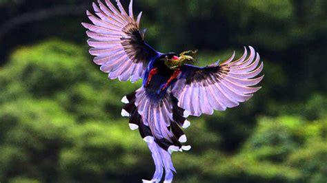 Beautiful Birds 1 - YouTube