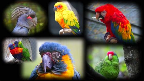 Collage with Beautiful Colorful Parrots Stock Footage ...