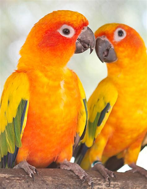 Best Love Birds Stock Photos, Pictures & Royalty-Free ...