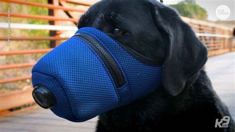 Coronavirus: Face masks for dogs are in demand