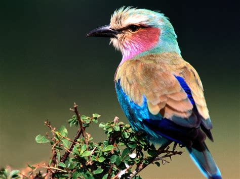 Unique Animals blogs: 8 Beautiful Birds Free Wallpapers ...