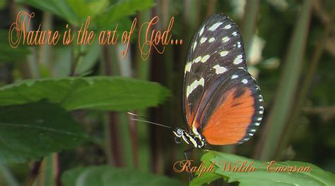 Nature Quote With Butterfly Free Stock Photo - Public ...