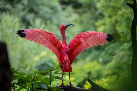 1000+ Beautiful Animals Photos · Pexels · Free Stock Photos