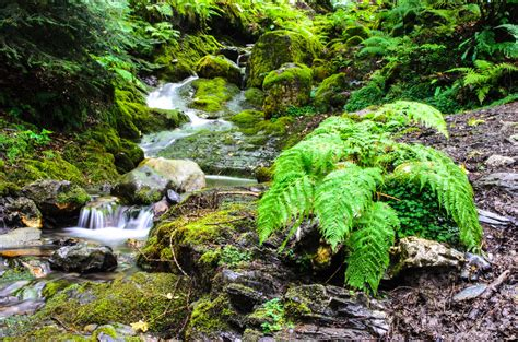 Nature Free Stock Photo - Public Domain Pictures