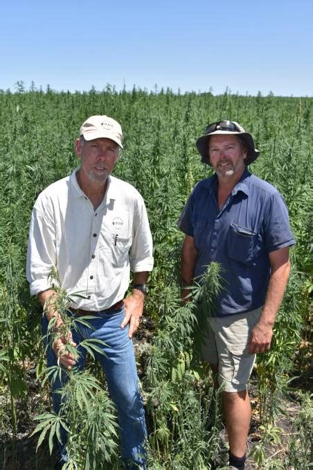 Good Country Hemp on track for first SA harvest | Stock ...