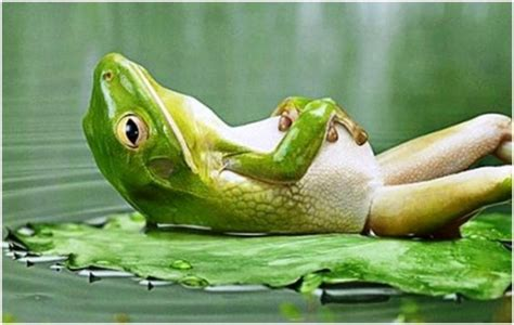 Funny Frog Picture: It's Time To Relax - YusraBlog.com