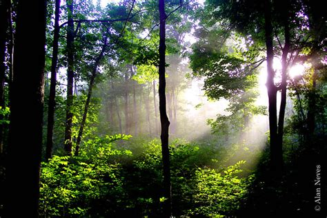 Sacred Grove   Flickr - Photo Sharing!