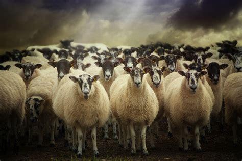 Avoiding The Herd Mentality
