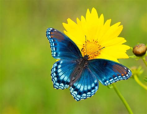 5 tips for photographing butterflies | MNN - Mother Nature ...