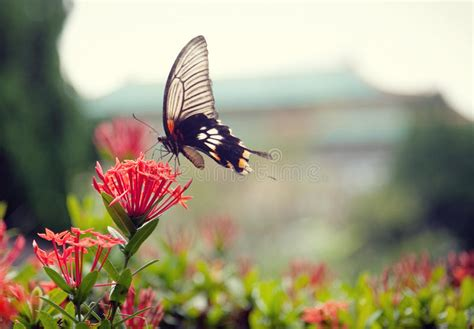 A Lovely Butterfly On A Beautiful Flower Stock Photo ...