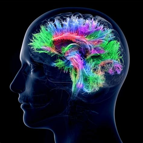 Too Many Synaptic Connections in Cerebellum Creates Problems | Psychology Today