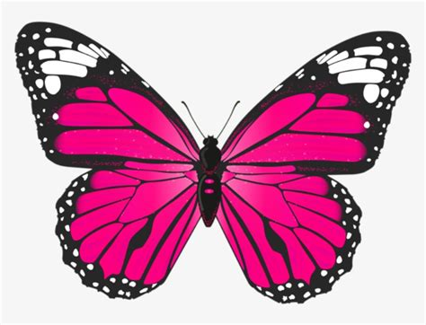 Butterfly Png Image Jpg Royalty Free Download - Butterfly ...