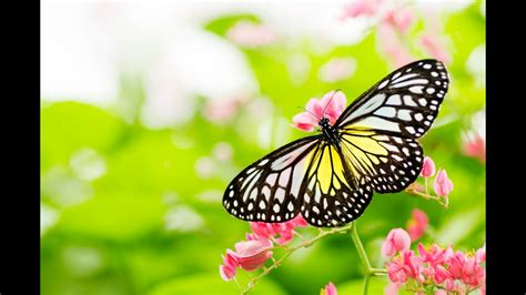 Butterfly Sanctuary: Guided Meditation for Peaceful Mind ...