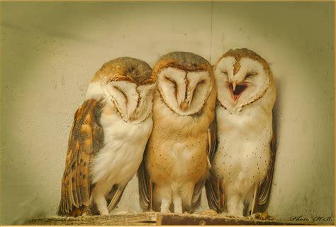 Aufwachen - genug geschlafen! Foto & Bild   natur, tiere ...