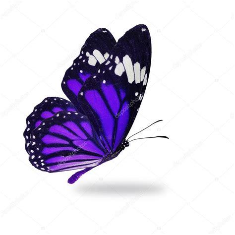 Purple monarch butterfly flying — Stock Photo © thawats ...
