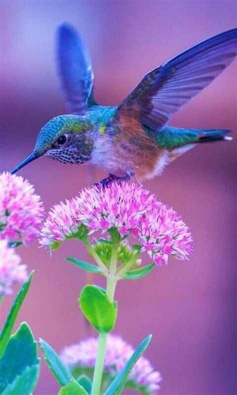 Beautiful Hummingbird   Beautiful birds, Birds, Pretty birds