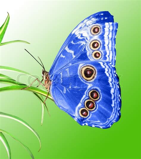 Beautiful butterfly on a green leaf   Stock Photo   Colourbox