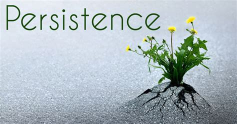 persistence – The Reflecting Pool