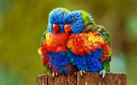Free photo: Colorful Parrot - Animal, Bird, Colorful ...