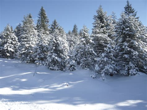 Free Images : tree, forest, branch, snow, winter, frost ...