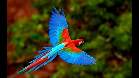 Amazing Animals - Beautiful Nature - YouTube